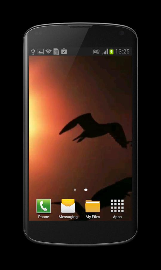 Seagull Free Video Wallpaper - screenshot