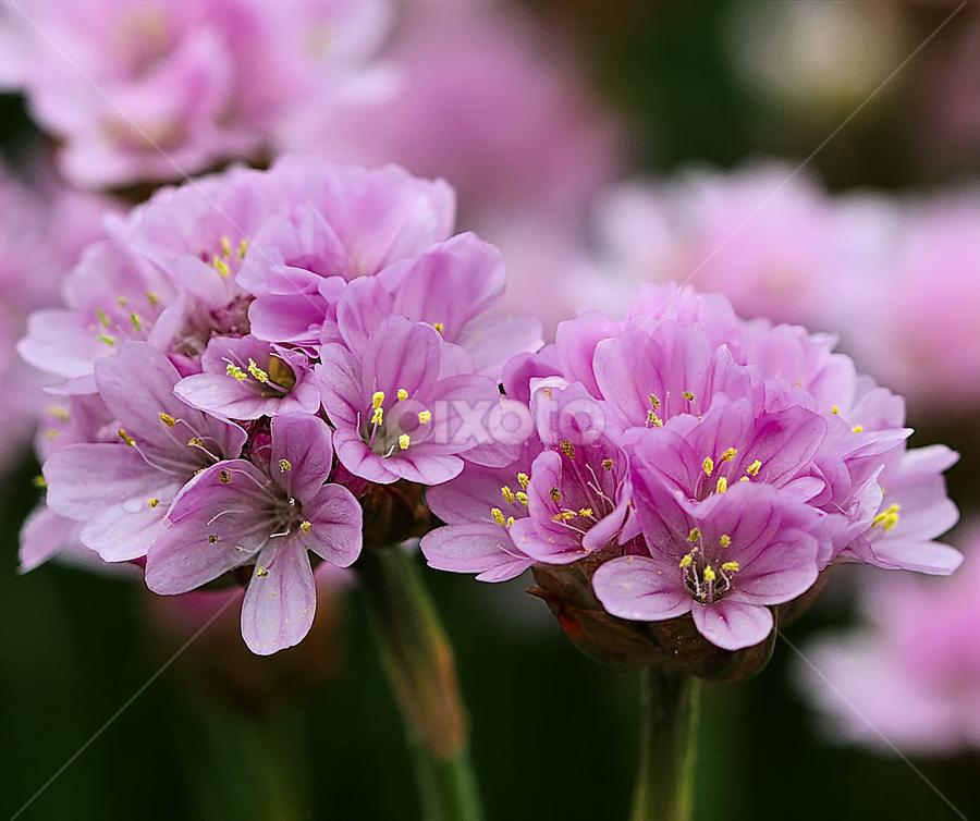 Flower garden by Nikola Vlahov - Flowers Flower Gardens ( nature, close up, bokeh, garden, flower )