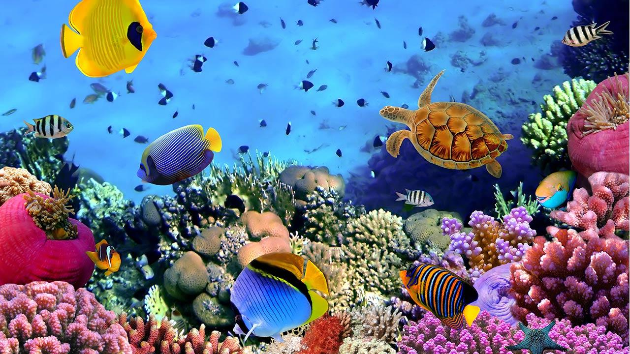 Ocean Fish Live Wallpaper Android Aplicaciones Appagg