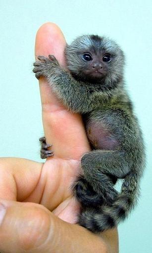 원숭이는 배경 화면 라이브