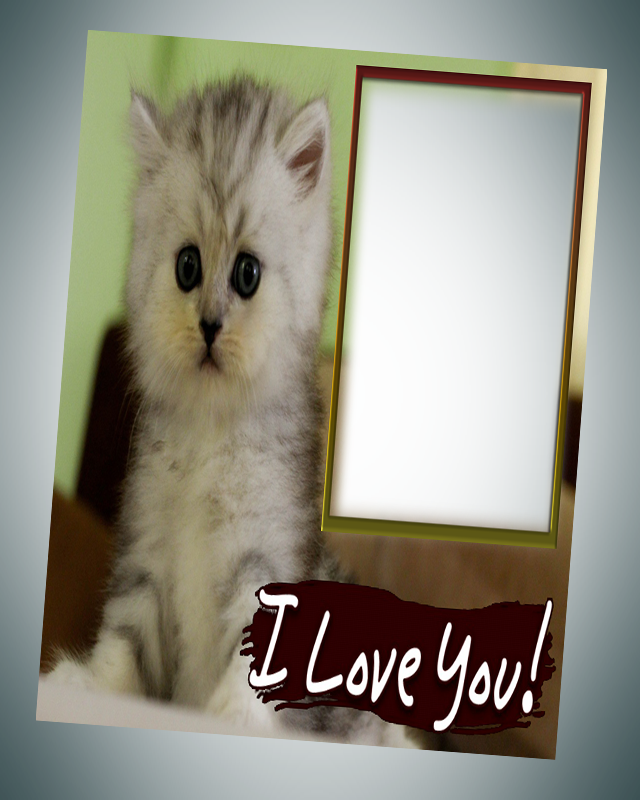 photo frames cat pic frames screenshot