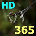 365 คัมภีร์ไบเบิล HD logo