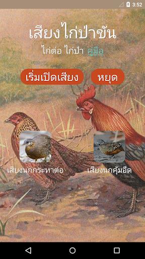 เสียงไก่ต่อ ไก่ป่าขัน