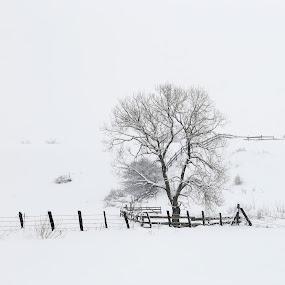 silence by Nicu Hoandra - Landscapes Prairies, Meadows & Fields ( field, winter, tree, snow, white )