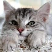 Kitty wallpaper