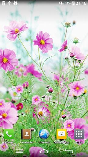 甜美花朵動態桌布