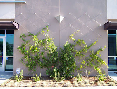 Fachada vegetal sistemas constructivos urbanarbolismo for Fachadas con plantas trepadoras