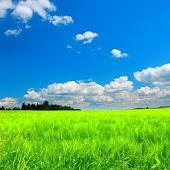 [AL] Green Field Theme