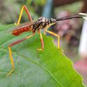 Passion Fruit Bug