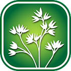 2450 North Rockies Wildflowers icon