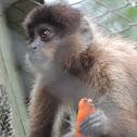 Monkey Nail