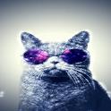 Cat Sunglasses Live Wallpaper icon