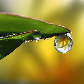 dew by Dedy Haryanto - Nature Up Close Natural Waterdrops