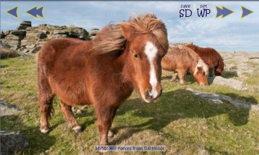 玩娛樂App|小小馬畫廊壁紙免費|APP試玩