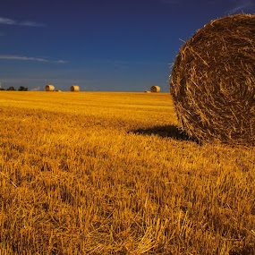 Bales under the Sun by Troy Snider - Landscapes Prairies, Meadows & Fields ( farm, sky, hay, harvest, famers, sun, farming )
