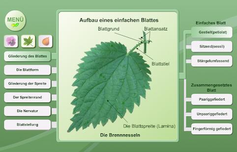 Fantastisch Pflanzenanatomie Abbildungen Zeitgenössisch - Anatomie ...
