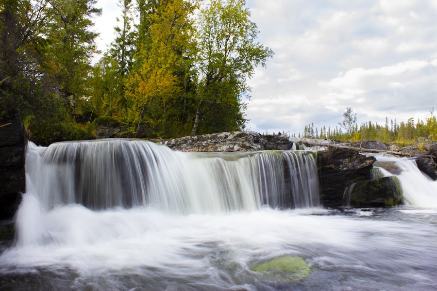 Trappstegsforsen by Erika Lorde - Landscapes Waterscapes ( water, sweden, trappstegsforsen, waterfalls, nature, fall, landscape )