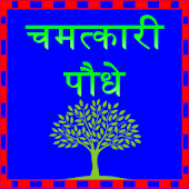 Miraculous plant in hindi