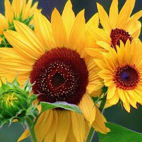 Sunflower Bunch by Sherri Woodbridge - Flowers Flower Gardens ( sunflower, yellow, flower,  )