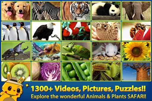 ABC サファリ動物 植物 - 動画 画像 ワード