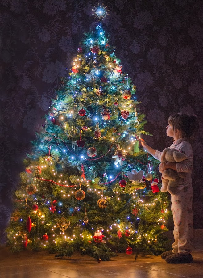 Zoe and her rabbit by Rachel Wells - Babies & Children Children Candids ( fantasy, christmas lights, christmas, christmas tree, children photographer )