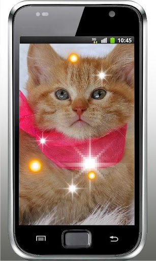 Pet Kitty photo Live Wallpaper