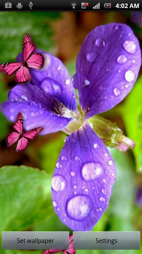 Flower & Colorful Butterflies - screenshot