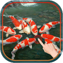 Magic Touch : Koi Fish icon