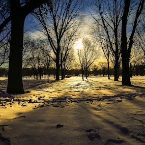 Diamnond Dust by Anna-Lee Nemchek Cappaert - Landscapes Weather ( shimmer, wisconsin, winter, morning sunshine, snow, fresh snow )