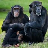 Monkeys For Kids - Animal Apps