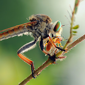 Breakfast by Andri Priyadi - Animals Insects & Spiders (  )
