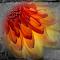 Fire_Pix.jpg