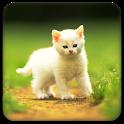 Cute little Cat  Full Theme logo