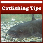 Catfishing Tips !
