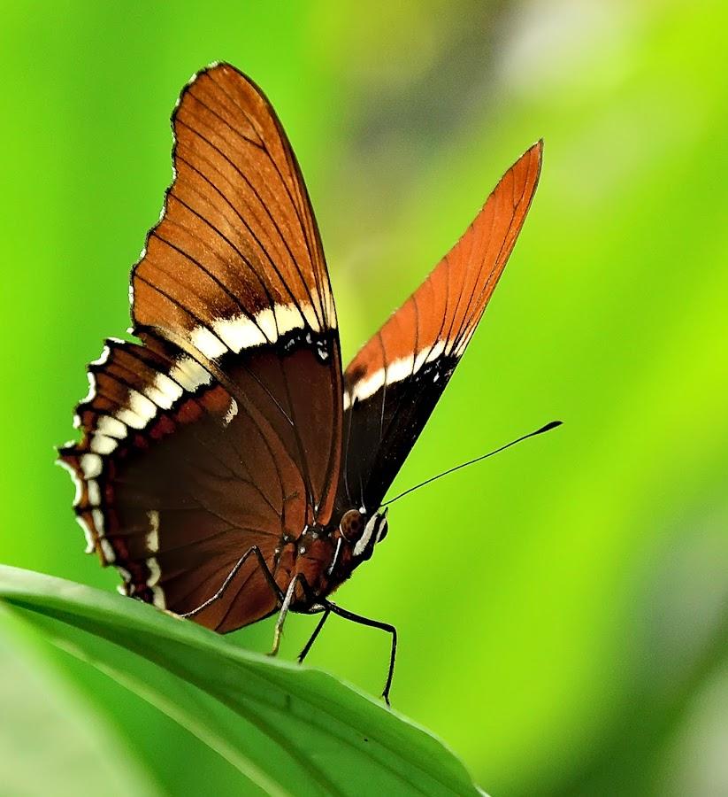 by Prajwal Prabhuraya - Animals Insects & Spiders