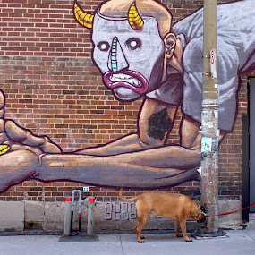Horned Canine by Ronnie Caplan - City,  Street & Park  Neighborhoods ( montreal, doorway, brick wall, vintage, graffiti, old-fashioned area, historic district, street scene, dog, man, sidewalk, , Urban, City, Lifestyle, people, crowd, humanity, society )