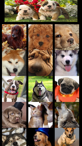 The dogs wallpaper