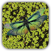 Dragonfly Live Wallpaper Free