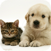 Doggy & Cat