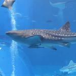 Real Shark Aquarium LWP
