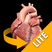 App Heart 3D Anatomy Lite APK for Windows Phone