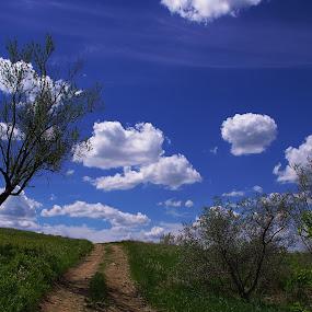 Up a Hill by Dustin White - Landscapes Prairies, Meadows & Fields ( clouds, hill, trail, path, praire )
