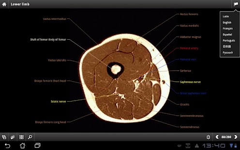 IMAIOS e-Anatomy - screenshot thumbnail
