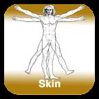 Anatomy - Skin