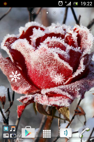 Winter Flower Live Wallpaper