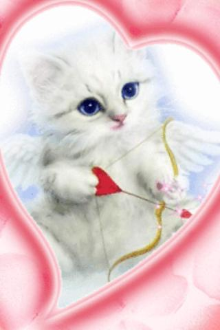 Blue Eyes Cat With Arrow Live Android App Screenshot