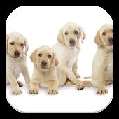 Perros, Primeros auxilios