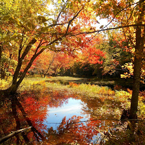 Frog Pond Foliage by Sandy Davis DePina - Landscapes Waterscapes ( water, maine, foliage, fall, leaves, pond, , color, colorful, nature, path, landscape, renewal, green, trees, forests, natural, scenic, relaxing, meditation, the mood factory, mood, emotions, jade, revive, inspirational, earthly )
