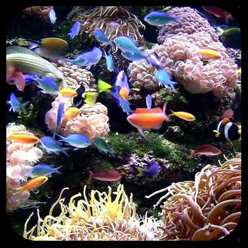 熱帶水族館动态桌布(PRO&FREE) 個人化 App LOGO-APP開箱王