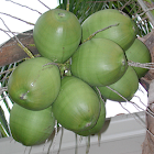 Coconut Matching icon